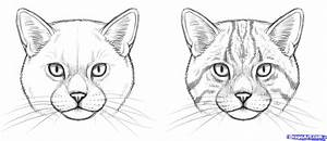 How, To, Draw, Wild, Cats, Step, By, Step, Forest, Animals, Animals, Free, Online, Drawing, Tutorial