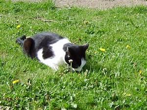 Katze Im Garten Begraben : ferienwohnung 1 nordseehof meyer friedrichskoog frau ~ Lizthompson.info Haus und Dekorationen
