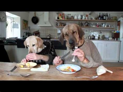dog eating at table two dogs dining youtube