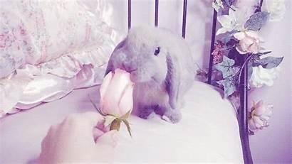 Pastel Bunny Goth Kawaii Rabbit Pretty Gacha