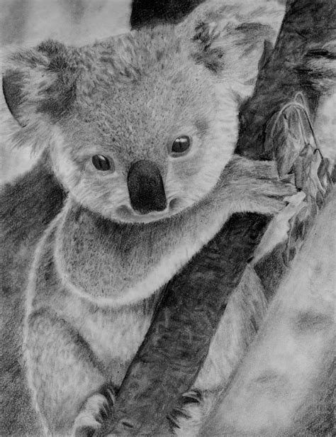 Best Koala Drawing Ideas And Images On Bing Find What You Ll Love