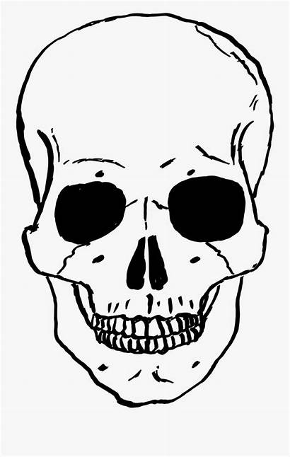 Skeleton Clipart Skull Clip Face Coloring Clipartkey