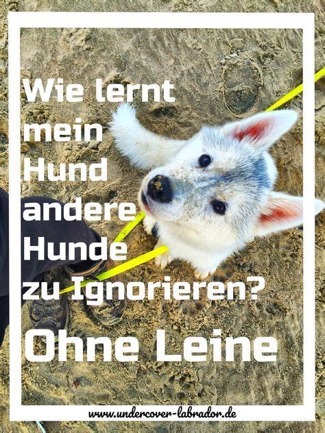 Glueckliche Haustiere Sauberkeit Und Erziehung by Pin Hans Wurst Auf Tierratgeber Hunde