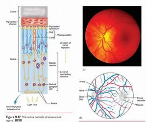 The Structure Of The Eye And The Functions Of These
