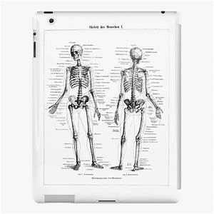 U0026quot Human Skeleton Labeled Diagram Black White Illustration