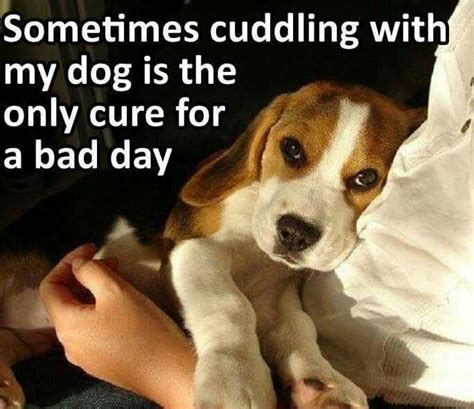 1000 sweet dog quotes on pinterest dog quotes dog and