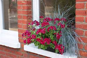 Plants, For, Window, Boxes, Pictures