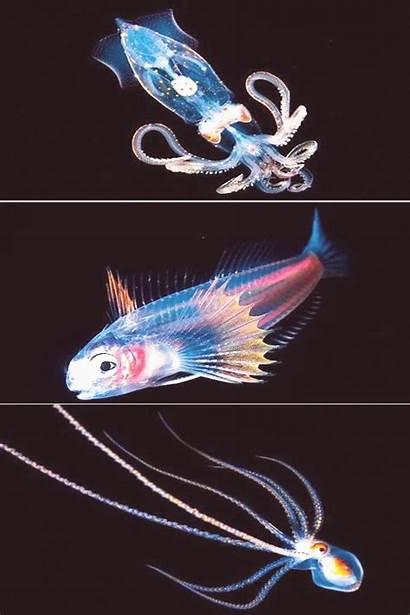 Sea Deep Fish Rare Water Shark Creatures