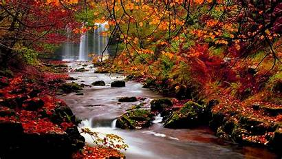 Autumn Nature Landscape Trees Leaves Leaf Wallpapers