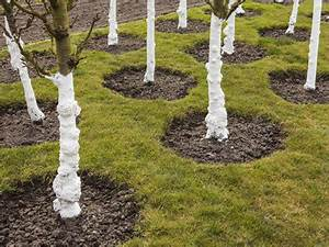Protection Arbres Fruitiers : pincelar as rvores de fruto ~ Premium-room.com Idées de Décoration