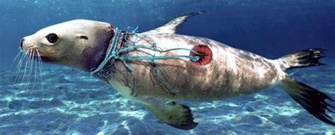 por  los animales marinos se extinguiran antes  las especies terrestres tecnologia