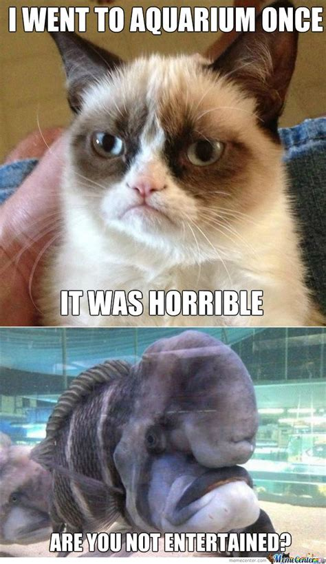 Cat Interesting Meme - meme center largest creative humor community grumpy cat grumpy cat meme and meme