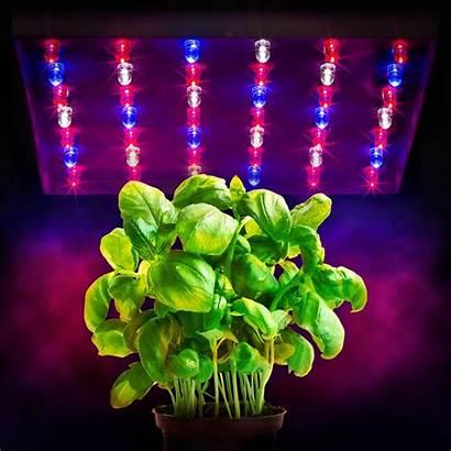 Led Grow Lights Watt Hydroponics Tri Band