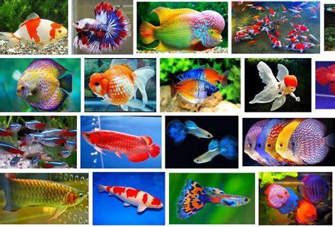 19 Jenis Ikan Hias daftar harga ikan hias semua jenis terbaru januari 2019