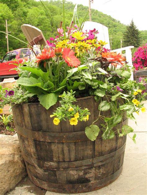 wine barrel planters 26 best whiskey barrel planters images on