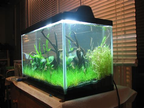 fertilizer for planted aquarium planted aquarium fertilizer how to articles