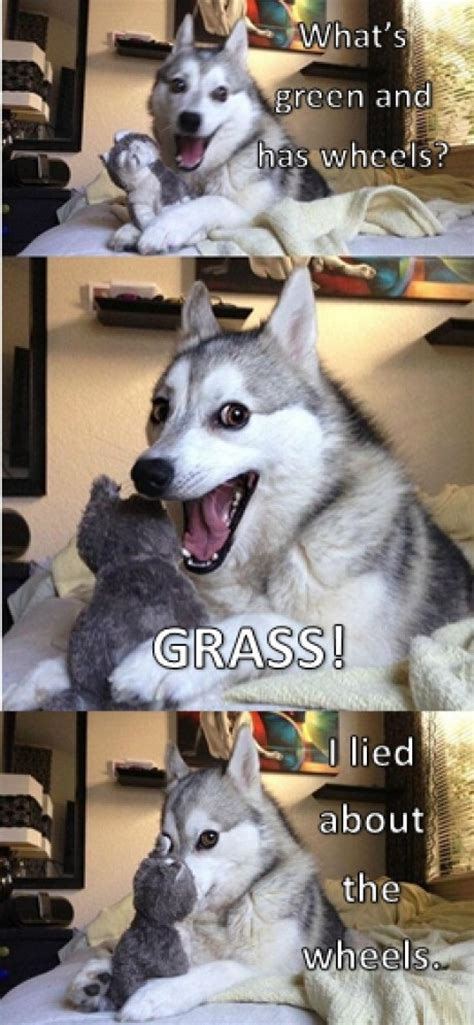 happy husky memes image memes  relatablycom