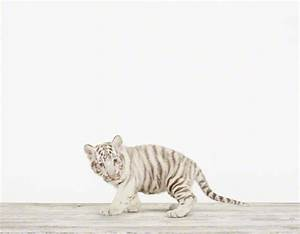 Baby White Tiger No. 2 - The Animal Print Shop by Sharon ...