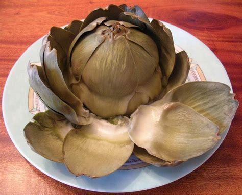 cuisiner les artichauts violets confrerie de l 39 artichaut de bretagne preparation