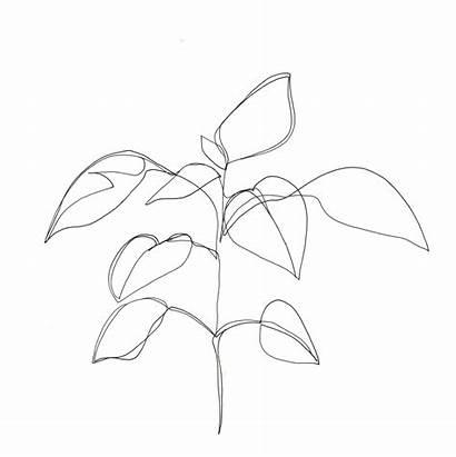 Drawing Minimal Line Minimalist Plant Drawings Plants