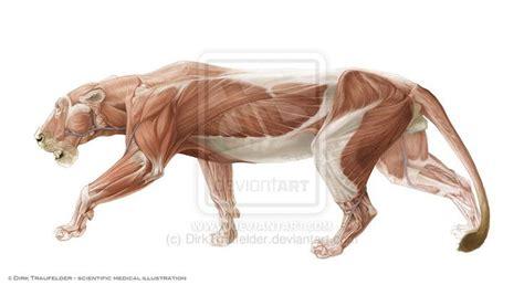 Lion Anatomy 2 By Dirktraufelder On Deviantart