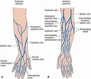 Great Diagram On Upper Extremity Venipuncture Sites