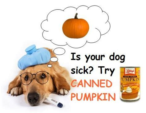 Using Pumpkin For Diarrhea In Dogs by 17 Best Ideas About Canned Pumpkin For Dogs On Pinterest