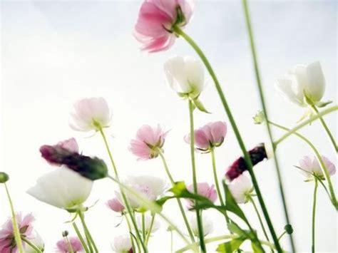 唯美花儿图片素材,令人心情好的花朵图片代码七七空间qqkj