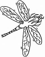 Dragonfly Coloring Pages Printable Zentangle Template Templates sketch template