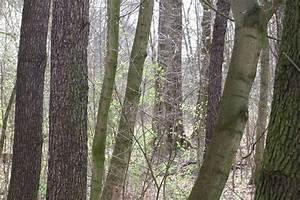 Bäume Schneiden Wann : wann darf man b ume schneiden oder f llen wann ist es ~ Lizthompson.info Haus und Dekorationen