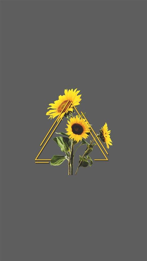 space aesthetic background sunflower alliance
