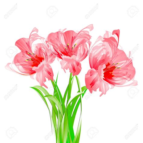 Flower No Background Clipart Transparent Background Pencil And In