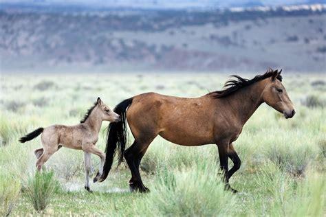 Horse Mustang Horses