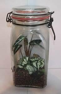 Sukkulenten Im Glas Pflanzen : hermetosph ren eine welt im glas stoffkreisl ufe im wohnzimmer hermetosph re pflanzen ~ Eleganceandgraceweddings.com Haus und Dekorationen