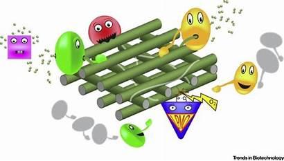 Lytic Polysaccharide Biomass Monooxygenases Cellulose Cartoon Conversion