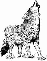 Coloring Pages Mean Wolf Getcolorings Ima sketch template
