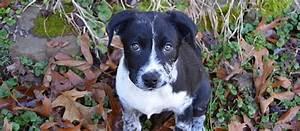 10 best medium dog breeds for families