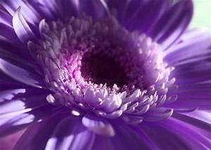 Free Pretty Purple Flower in Natural Light Creative ...