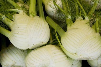 comment cuisiner les salicornes cuisiner le fenouil pratique fr