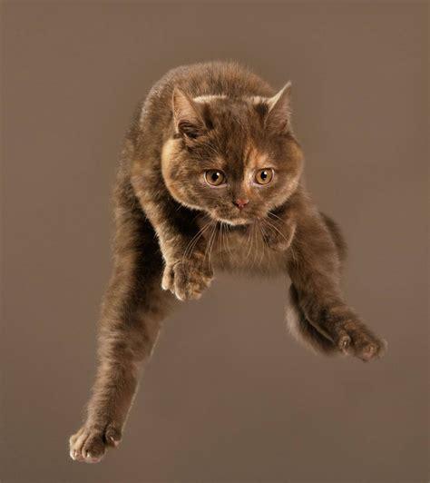 flying cats so segeln diese katzen durch die luft
