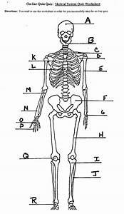 Image Result For Skeletal System Labeled