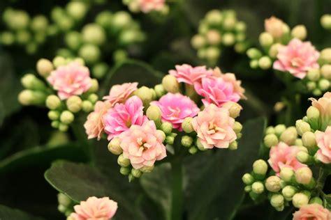Blühende Zimmerpflanzen Pflegeleicht by Unempfindliche Zimmerpflanzen 14 Pflegeleichte
