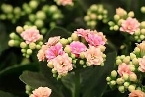 Pflegeleichte Zimmerpflanzen Mit Blüten : unempfindliche zimmerpflanzen 14 pflegeleichte dekorative pflanzen ~ Markanthonyermac.com Haus und Dekorationen
