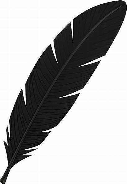 Feather Clipart Crow Eagle Vector Feder Drawing