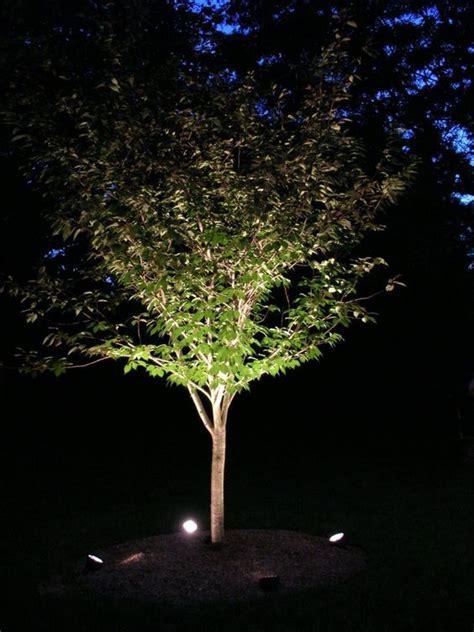 Tree Uplighting Ideas  Uplighters And Downlighters