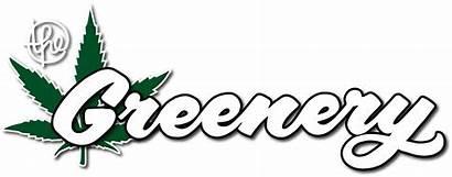 Greenery Dispensary Company Marijuana Cannabis Hash Factory