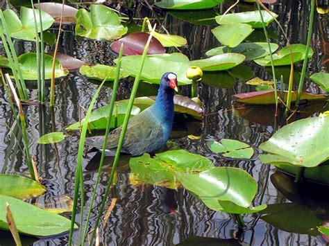 Everglades Fan Boat Toar