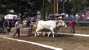 Ox Pull 2013 Deerfield Fair Oxen Nh Pulling Video 11