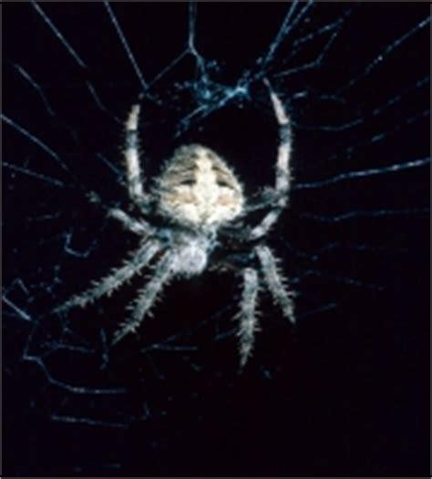 Barn Spider Bite by Blackwidow Spider