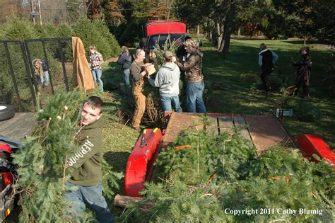 christmas tree farm somerset nj phillipsburg high school ffa visits central jersey s wolgast tree farm